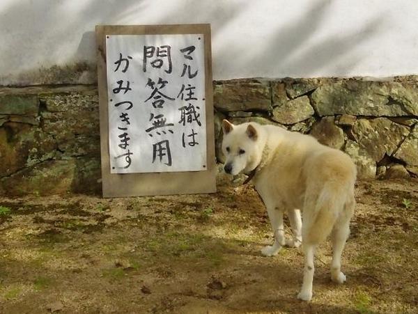 正宗山 洞春寺 (山口営業所ブログ更新)